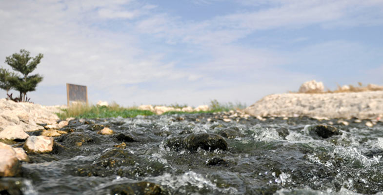 alkaraanalagoon,qatar,attracts,diverse,species